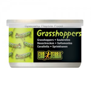 Exo Terra Canned Wild Grasshoppers Small