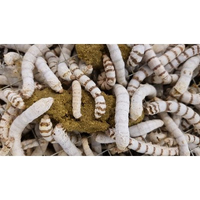 Silkworm Handy Packs