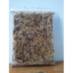 Frozen Giant Mealworms