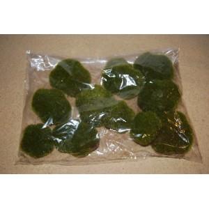Moss Rocks (Pack of 12)